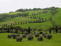 дорога Тоскана типичная Стоковое Фото