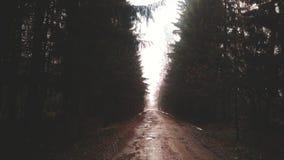 дорога mak koh пущи Стоковое Изображение