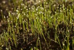 оросите траву Стоковая Фотография RF