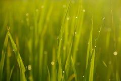 Орошает на зеленом цвете Стоковое Изображение