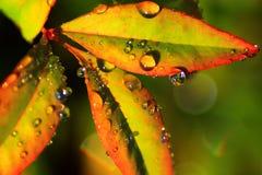 Орошает на листьях Стоковые Фотографии RF