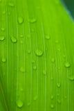 орошает утро цветков тропическое Стоковые Изображения