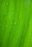 орошает утро цветков тропическое Стоковые Фотографии RF
