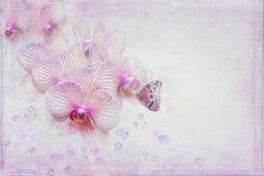 орхидеи бабочки иллюстрация штока