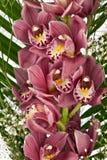 орхидеи букета пурпуровые Стоковое Изображение