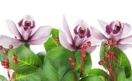 орхидеи граници пурпуровые Стоковые Фотографии RF