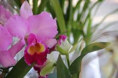 Орхидеи зацветенные весной Стоковое Изображение RF