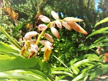 Орхидеи начиная зацветать Стоковые Изображения RF