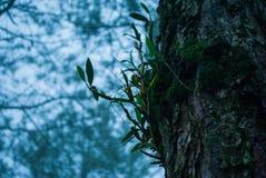 Орхидеи на большом дереве стоковые изображения rf