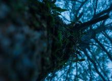 Орхидеи на большом дереве стоковое фото rf