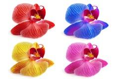 Орхидеи на изолированной предпосылке красивый цветок разветвляет орхидеи Стоковые Фото