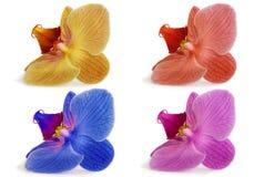 Орхидеи на изолированной предпосылке красивый цветок разветвляет орхидеи Стоковое фото RF
