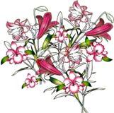орхидеи одичалые Стоковые Фото