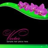 орхидеи предпосылки Стоковое Фото