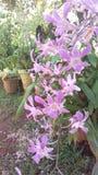 орхидеи пурпуровые стоковые фото
