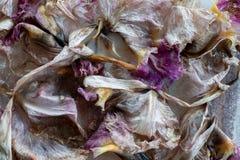 Орхидеи распадаться цветут лепестки на кровати льда стоковые изображения