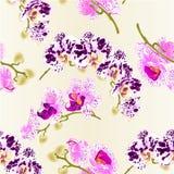 Орхидеи фаленопсиса безшовной текстуры красивые запятнанные и белые и фиолетовые стержни с концом вектора цветков и бутонов винта Стоковое Изображение