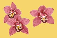 орхидеи Стоковая Фотография RF
