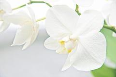 орхидеи стоковое фото rf