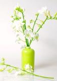 орхидеи freesia Стоковое Фото