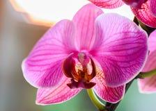 орхидея выделила с светом солнца на заходе солнца - очень sh стоковое фото
