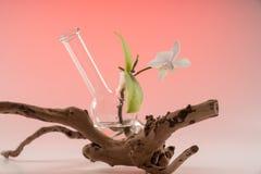 Орхидея в сосуде куря аксессуаров издает долгий низкий звук 2 стоковые изображения rf