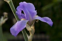 Орхидея в утре Стоковые Изображения