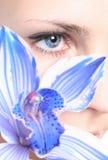 орхидея глаза ang Стоковые Фотографии RF