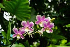 Орхидея завода пурпурная стоковое фото