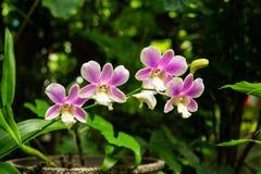 Орхидея завода пурпурная стоковое изображение rf