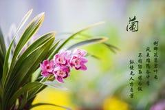 Орхидея зимы в Китае стоковая фотография