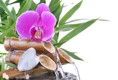 Орхидея и в форме сердц камешек на фонтане стоковая фотография