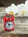 Орхидея красного будильника белая на деревянной деревенской таблице Стоковое Изображение RF