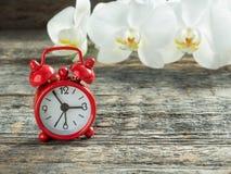 Орхидея красного будильника белая на деревянной деревенской таблице Стоковые Изображения
