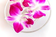Орхидея на белой предпосылке - взгляд сверху, закрыло вверх Стоковая Фотография