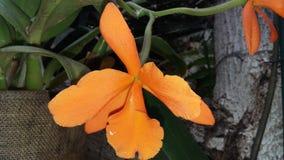 орхидея одичалая стоковое изображение rf