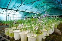 орхидея питомника зеленой дома цветка Стоковые Изображения