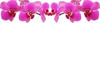 орхидея рамки Стоковые Изображения RF