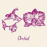 Орхидея цветет хворостина, с надписью, план Стоковые Изображения RF