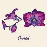 Орхидея цветет хворостина, с надписью, пурпур, пинк, голубой Стоковые Фотографии RF