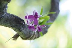 орхидея цветка Стоковые Изображения