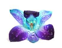 орхидея цветка Стоковое фото RF