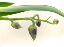 Орхидея 03 Стоковое фото RF