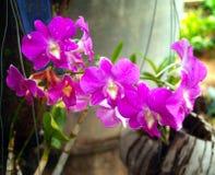 орхидея 04 Стоковое Изображение RF