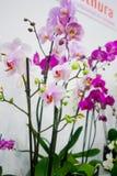 орхидея 2 стоковое изображение rf