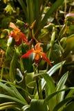 Орхидея Стоковая Фотография