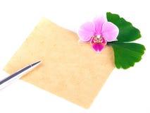 орхидея ginkgo Стоковое Изображение RF