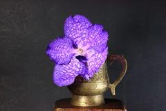 орхидея vanda цветка Стоковая Фотография RF