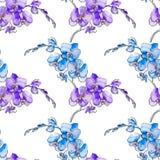 орхидеи Безшовная картина тропических цветков вектор Стоковое Изображение RF