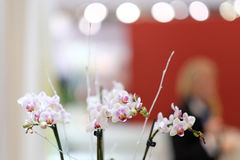 орхидеи белые Стоковое Изображение